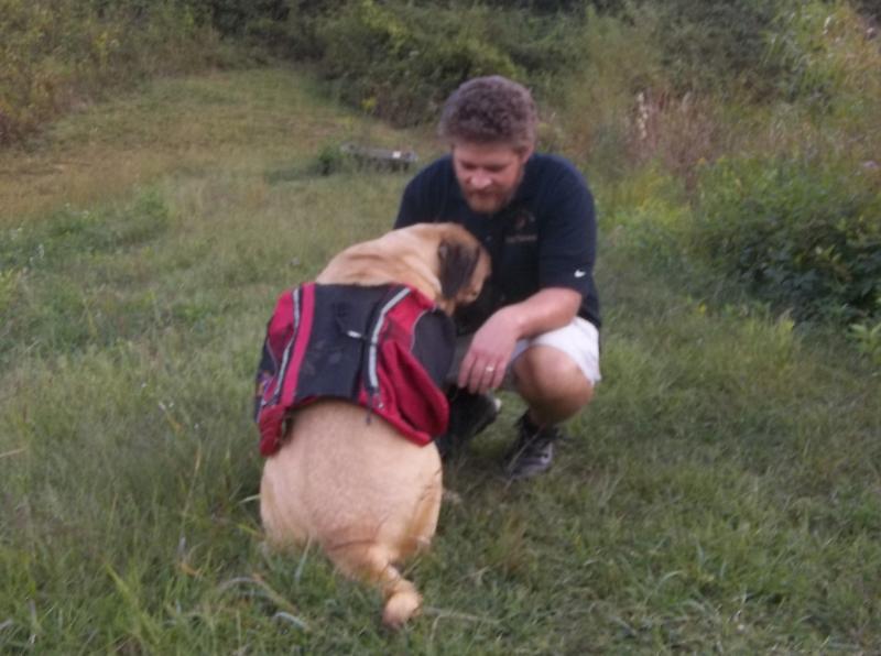 train your mastiff